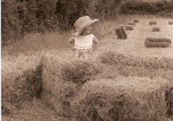 Irish Hay Day