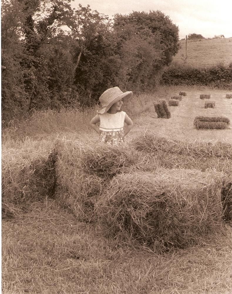 Irish Hay Day