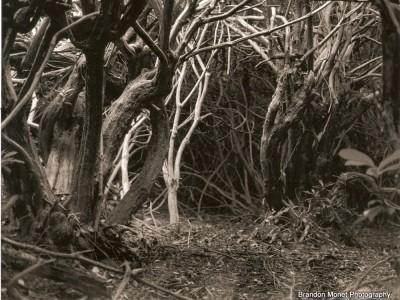 enchanted-ireland-1391638354-jpg