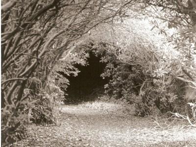 narnia-path-1386887557-jpg
