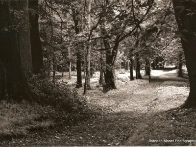 walk-among-trees-ireland-1392220446-jpg